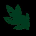 rf_mag_karite_green